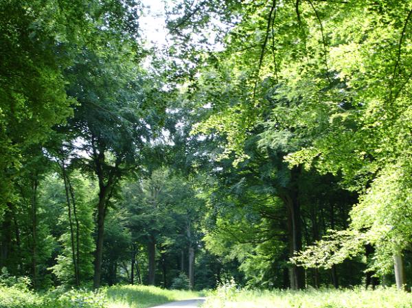 Location de gîte dans les Sept Vallées en France  un logement parfait pour découvrir la splendeur de cet endroit