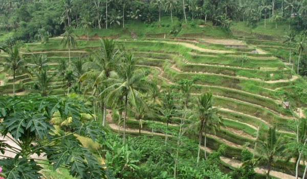 Location de vacances à Bali  destination idéale pour les familles avec des enfants